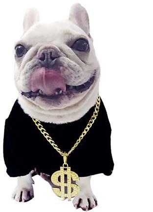 bling dog