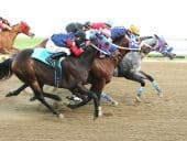 Colorado Underground Horse Racing Exposes Dangers Of Unregulated Gambling Activity