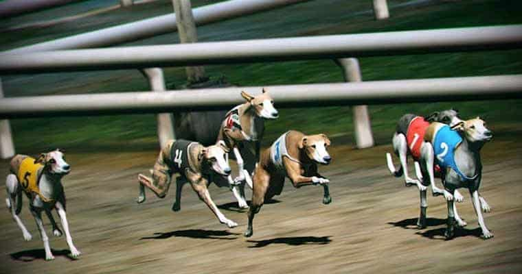 Virtual Greyhounds Racing Towards The Screen