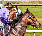 Mobile Horse Betting Apps